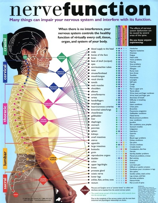 Spinal Nerve Chart - Chart of Chiropractic Subluxation Relationships